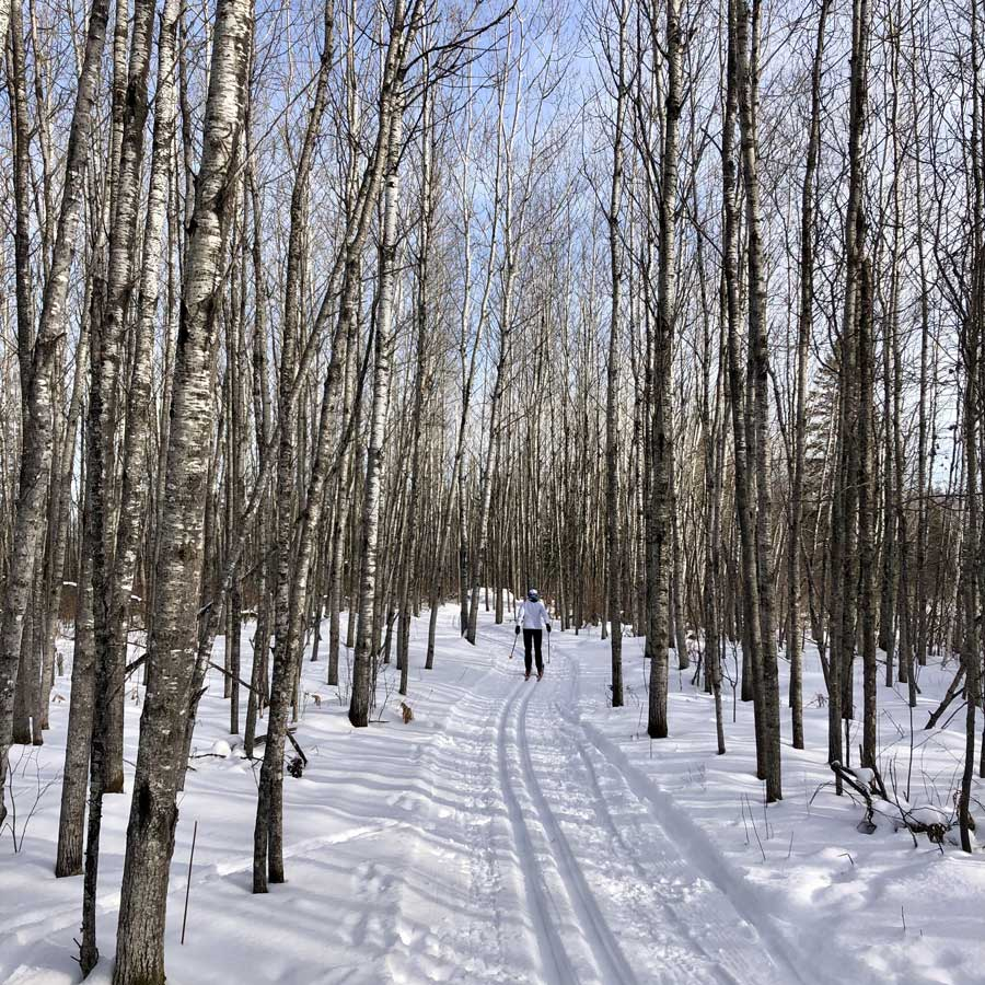 Shelley Chandler cross-country skis the Biskey Ponds Trails near Duluth on Jan. 6. When she and the author came out of the woods, they learned the U.S. Capitol Building was under attack. Photo courtesy of the author.